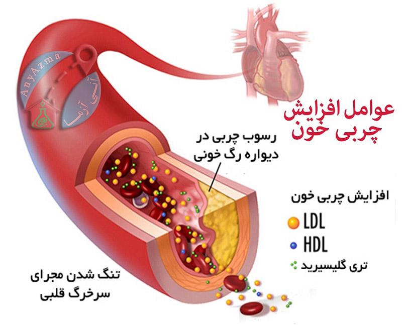 اجزای تشکیل دهنده کلسترول خون